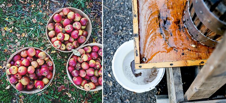 Apple Cider Pressing | www.floatingkitchen.net