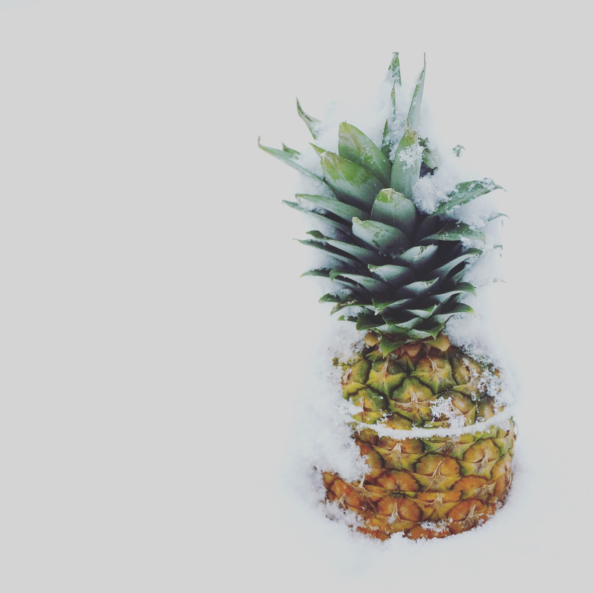 Pineapple in the snow | www.floatingkitchen.net