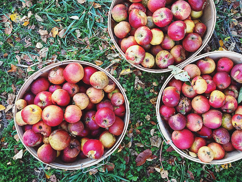 Apple Pie Smoothie Bowl | www.floatingkitchen.net