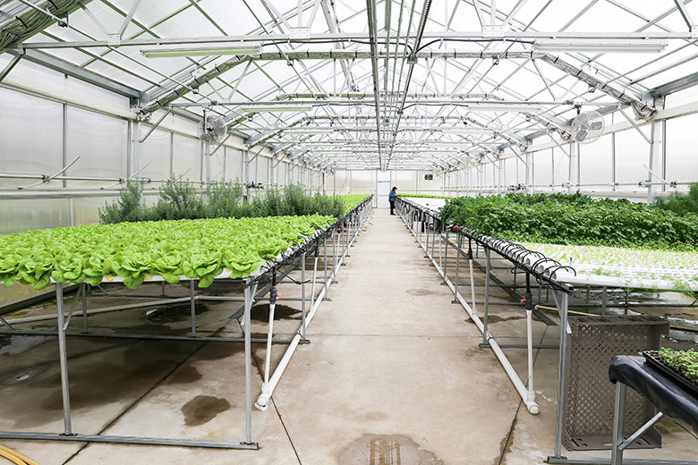 Donabedian Farms Greenhouse